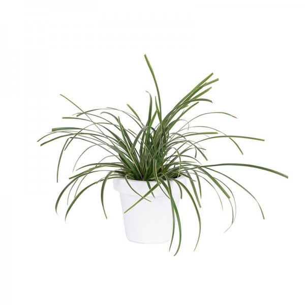 WoonQ Tuinplanten