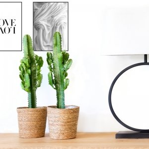 Cowboy Cactus 'Euphorbia' - Groen