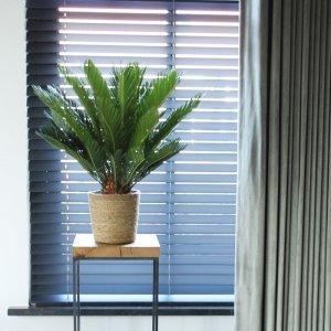 XL Sagopalm 'Cycas Revoluta' - Groen