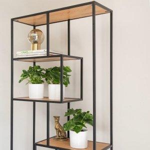 Set van 3 - Philodendron Bipinnatifidum 'Atom'