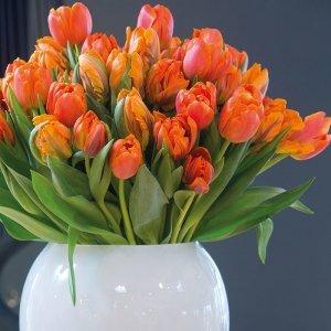 35 stuks Bloembollen - Tulpen Oranje