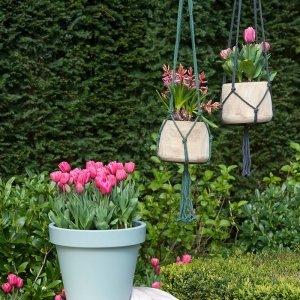 35 stuks Bloembollen - Tulpen Roze