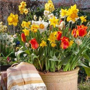 40 stuks Bloembollen - Narcissus Mix