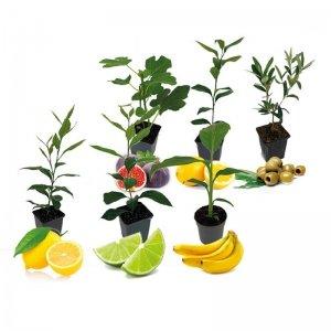 Set van 6 - Mediterrane Planten