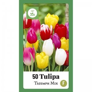 50 stuks Bloembollen - Tulpen 'Triumph Mix'