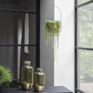 Erwtenplant 'Senecio Herreianus'