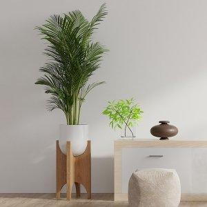 XL Areca - goudpalm 'Dypsis Lutescens' - Groen