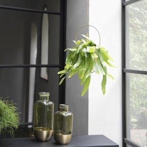 Bladcactus 'Epiphyllum Pumilum'