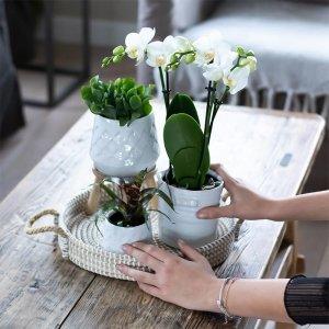 Planten Gift Set - Bohemian White