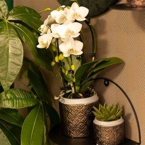 Planten Gift Set - Grey Edge Gold