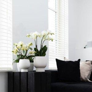 Planten Gift Set - Scandic White